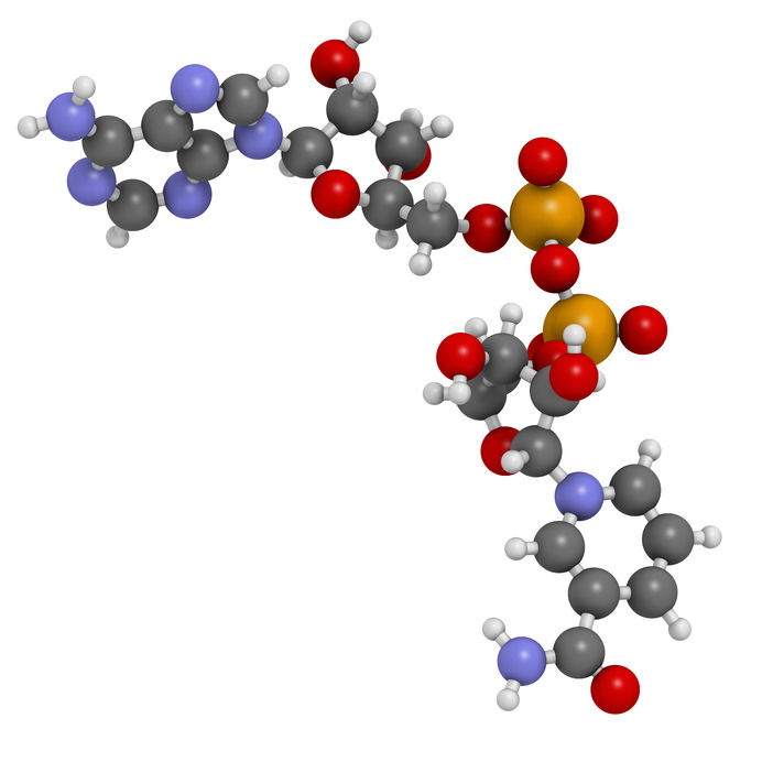 25254389 - nicotinamide adenine dinucleotide (nad+) coenzyme molecule. important coenzyme in many redox reactions. atoms are represented as spheres with conventional color coding: hydrogen (white), carbon (grey), nitrogen (blue), oxygen (red), phosphorus (orange).
